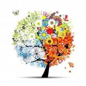 albero_4_season_sgrana